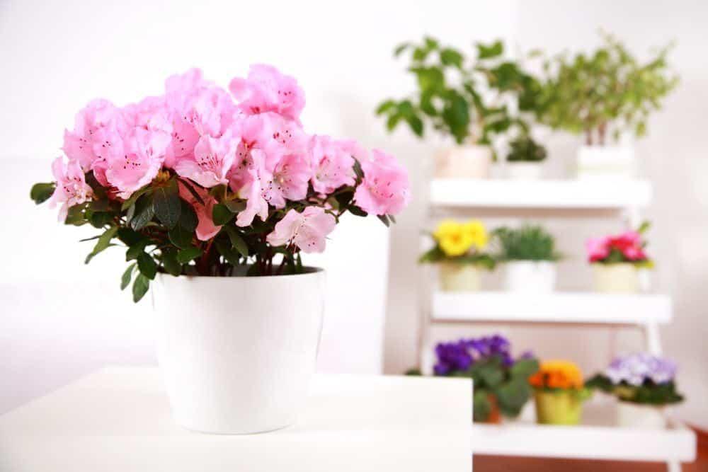 augalai-interjere-4f9fdab70420a
